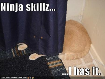 funny-pictures-curtain-ninja-cat